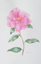 pink camelliathumb